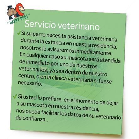 veterinario-residencia-canina